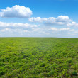 Green field under midday sun — Stock Photo #4150609