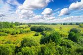Золотой лес в Солнечный день под голубым небом. — Стоковое фото