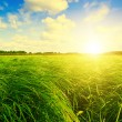 Stock Photo: Green grass field and forest under sunset sun on blue sky.