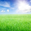 Green grass field under midday sun on blue sky. — Stock Photo #4435718