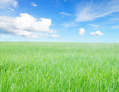 Green grass field under midday sun on blue sky. — Stock Photo