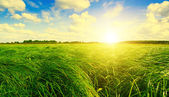 Green grass field and forest under sunset sun on blue sky. — Stock Photo