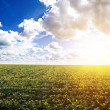 Green field under midday sun — Stock Photo #4690545