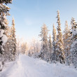 White road in deep winter forest — Stockfoto #5171496