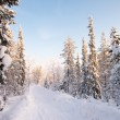 White road in deep winter forest - Stock Photo
