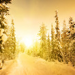 Stock Photo: White road in deep winter forest