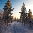 White road in deep winter forest — Stock Photo #5171510