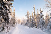 White road in deep winter forest — Stock Photo