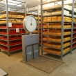 Stock Photo: Cheese storage in dairy