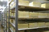 Cheese storage in dairy — Stock Photo