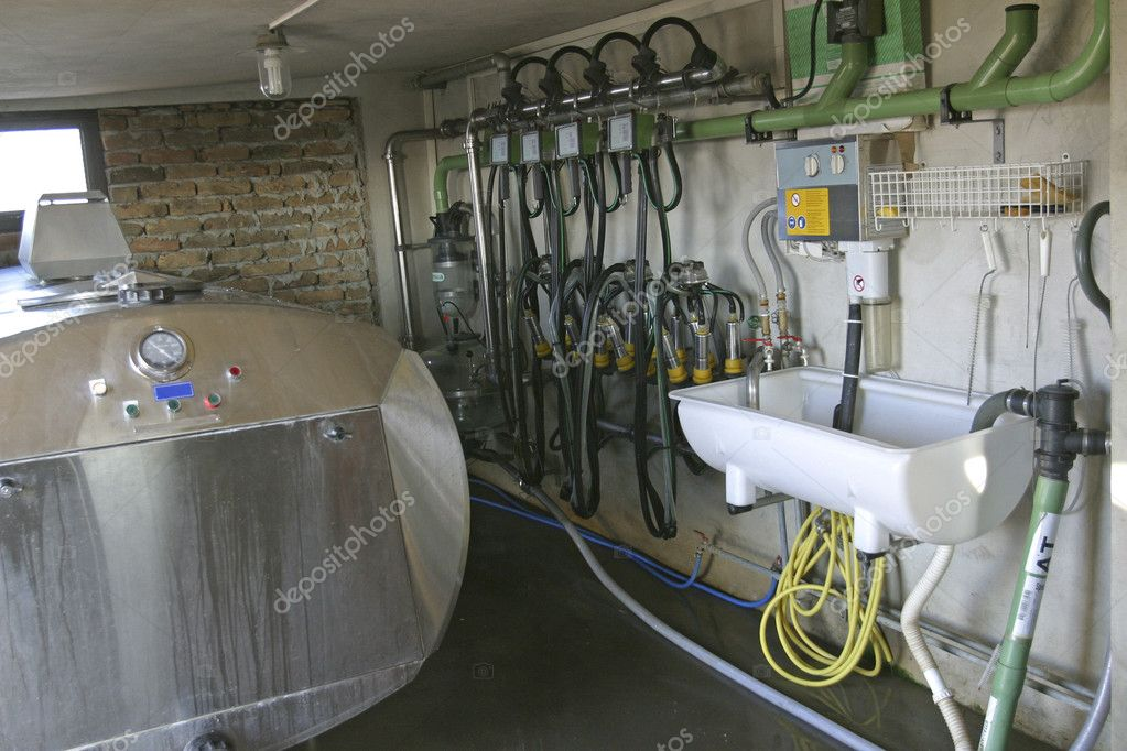 New suction Milking Machines installed on farm  Stock Photo #4158494