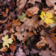 Colorful fall leaves — Stock Photo #4162019