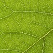 Stock Photo: Close up of delicate green leaf pattern