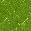Royalty-Free Stock Photo: Close up of delicate green leaf pattern