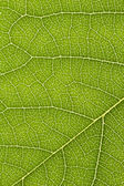 Close up of delicate green leaf pattern — Stock Photo
