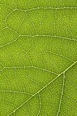 Narin yaprak yeşil desen yakın çekim — Stok fotoğraf