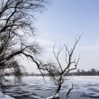 Frozen lake and trees - Stock Photo