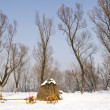Old farm cart in snow — Stock Photo #4174280