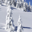 Stock Photo: Snow covered pine trees on mountain side