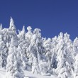 Snow covered fir tree — Foto Stock