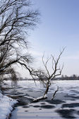 Frozen lake and trees — Stock Photo