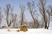 Viejo carro de la granja en la nieve — Foto de Stock