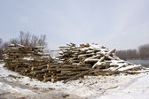 Cut timber on bank of river in winter — Stock Photo