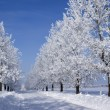 Stock Photo: Frozen trees