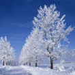 Frozen trees — Stock Photo
