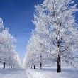 Frozen trees — Stock Photo #4152445