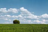 Campo e árvore — Fotografia Stock