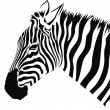 Zebra — Stock Vector #4163800