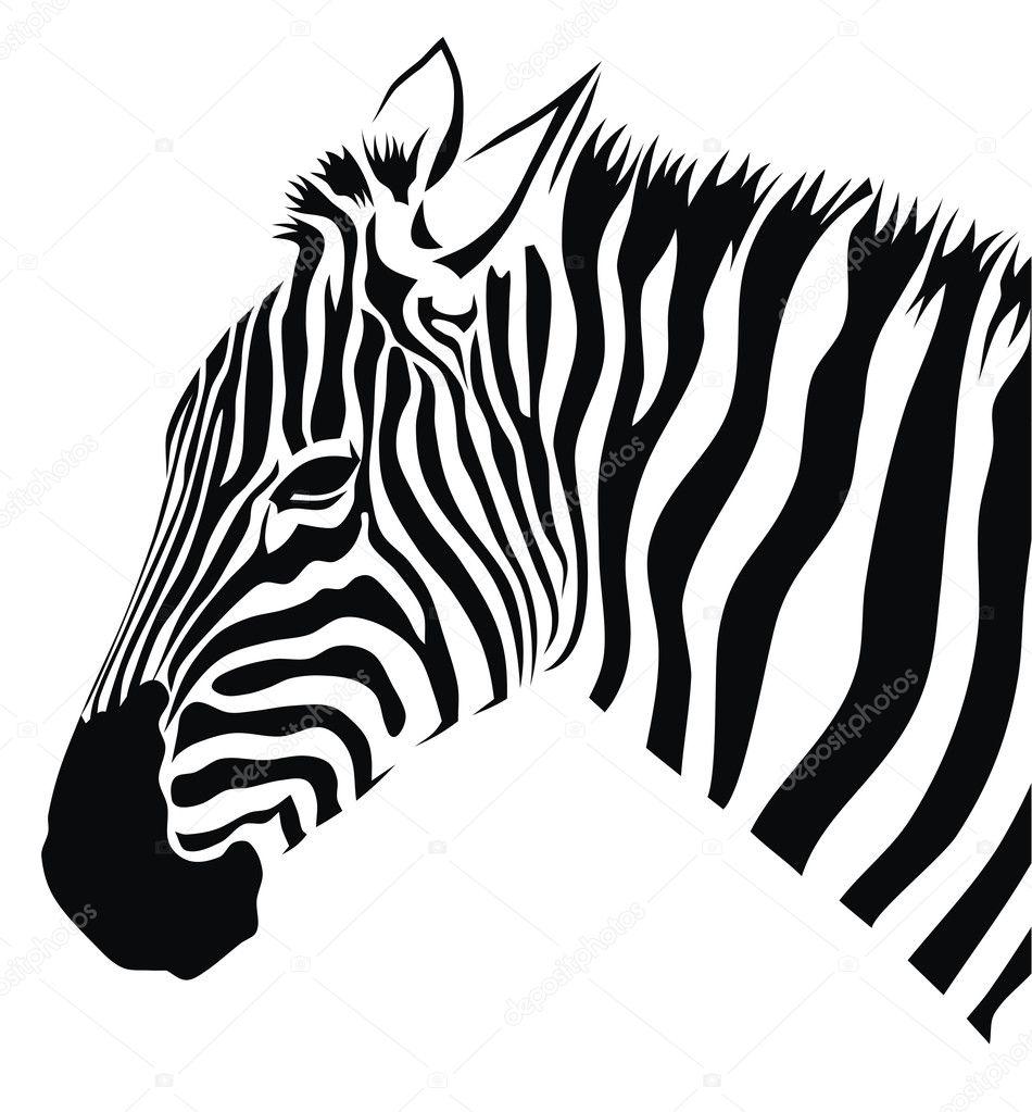 Zebra Stock Vector 169 Oorka5 4163800