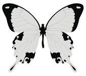 Butterfly — Vector de stock