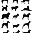 Various dog - Stock Vector
