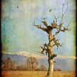 Aging tree photography — Stock Photo #4151031