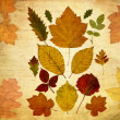 Autumn grunge background — Stock Photo