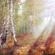 Stock Photo: Autumn forest pastel