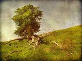 Stárnutí strom fotografie — Stock fotografie