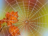 Spindelnät, dagg och rostiga blad — Stockfoto
