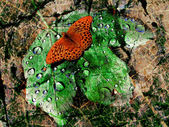 Abstract butterfly and leaf textured — Stock Photo