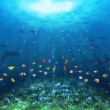Underwater scene - Stock Photo