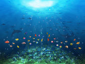 Underwater scene — Stock Photo