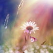 Daisy under the sunlight — Stock Photo #4190552