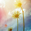 Daisy under the sunshine — Stock Photo