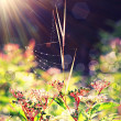 Flower under the sunshine — Stock Photo