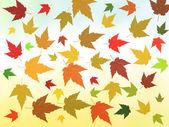 Autumn rusty leaves pattern — Stock Photo