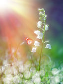 Lily of the valley under the sunshine — Stock Photo