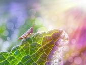 Grasshopper under the sunshine — Stock Photo