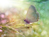 Butterfly under the sunshine — Стоковое фото